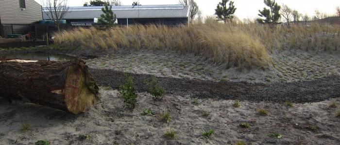 Duin/siergrassentuin in Callantsoog foto 2.
