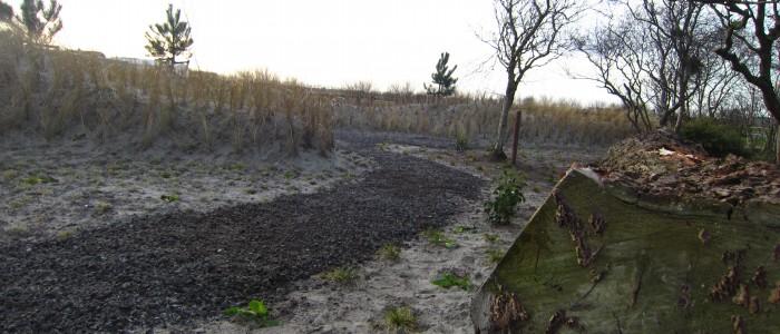 Duin/siergrassentuin in Callantsoog foto 3.