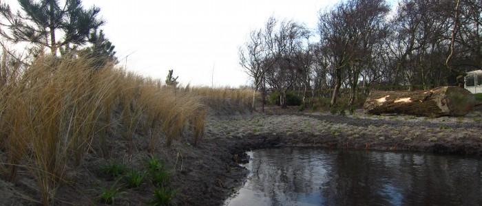 Duin/siergrassentuin in Callantsoog foto 4.